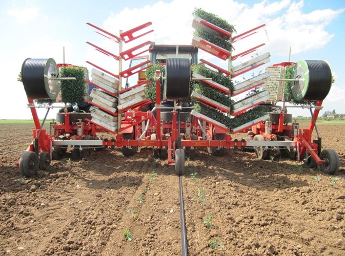 2019 Checchi & Magli Hemp transplanter Irrigation Kit Planter For Sale